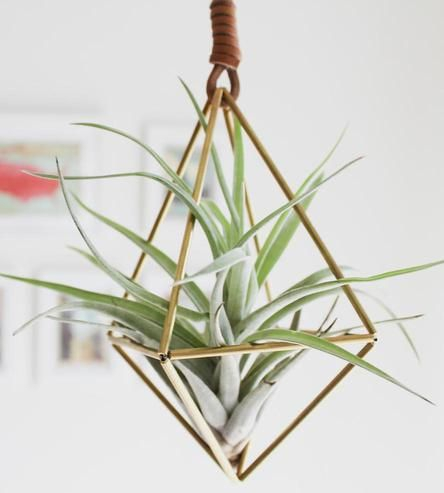 Cute voor thuis: luchtplantjes!