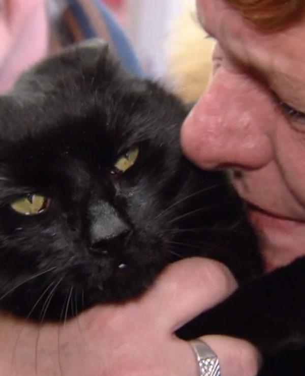 Emotioneel weerzien: Kat na 16 jaar weer thuis!