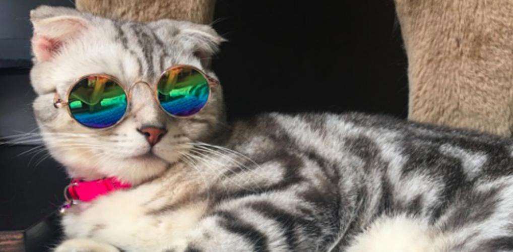 LOL: je kunt nu een zonnebril kopen voor je kat
