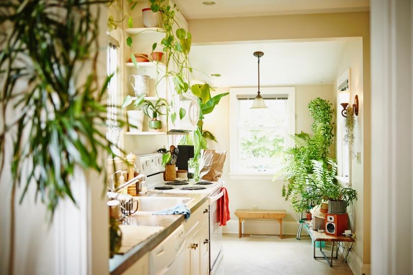 Last van fruitvliegjes? Zet dan déze plant in de keuken