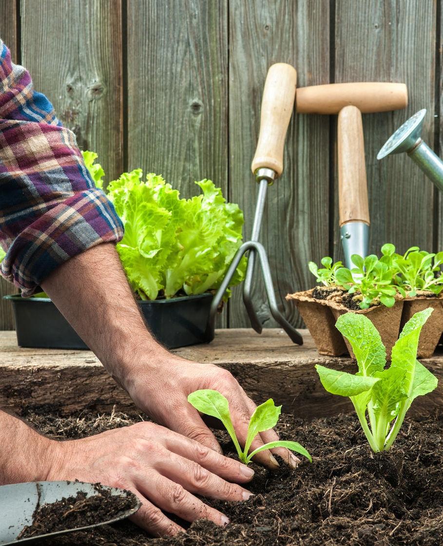 Kijktip: Eigen Huis en Tuin met boer Tom!