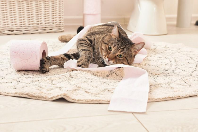 Dít is de reden dat je kat zo graag met toiletpapier speelt