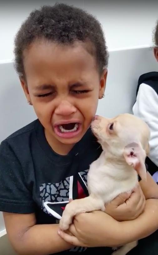 Jongetje huilt om schattig hondje