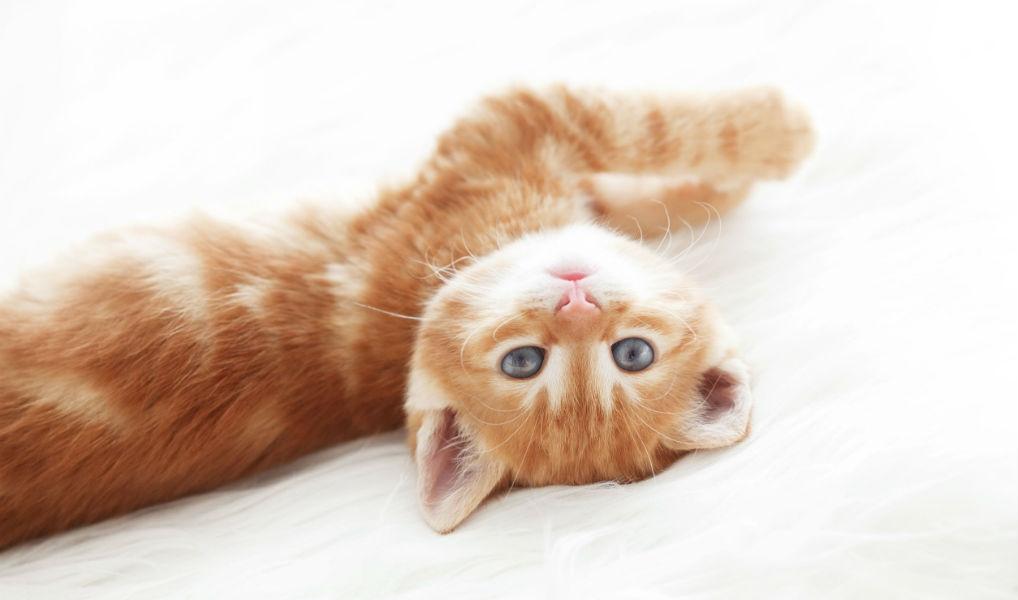 Niet voor de poes: zo leer je je kat trucjes