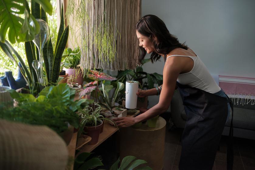 Plantengekkies, opgelet: hiér scoor je deze week een spotgoedkope kokospalm