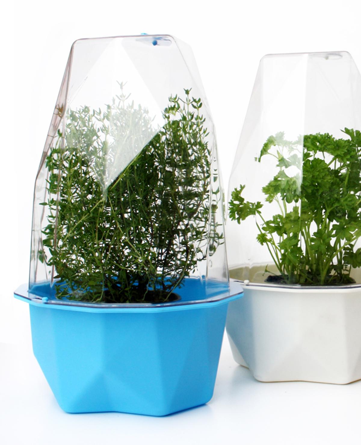 Win een Biosphere kweekkas plus wespenvanger