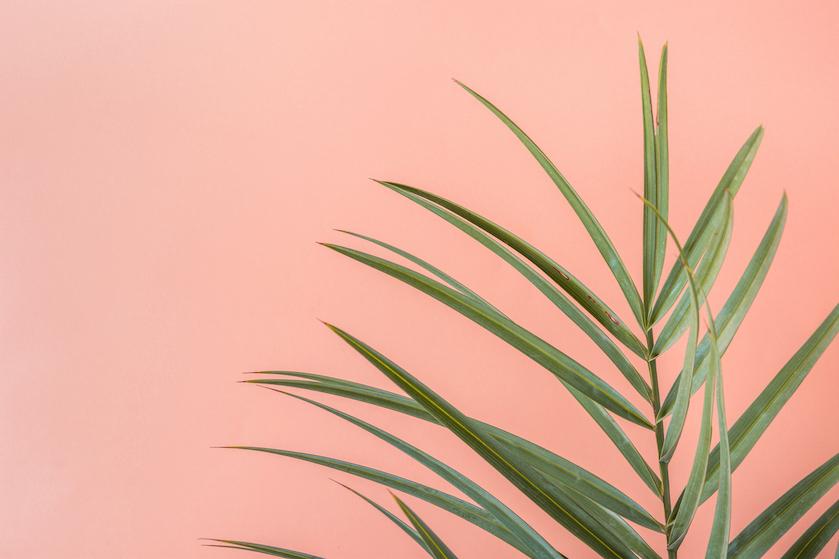 Even wegdromen: 5 roze stranden waar je nú naartoe wil