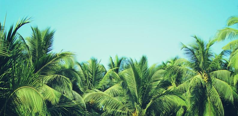 Dit bedrijf betaalt je € 8000 per maand om op vakantie te gaan