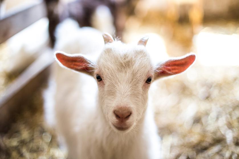 Brief van de week: 'Een paar dieren kunnen het leven gewoon even wat leuker maken'