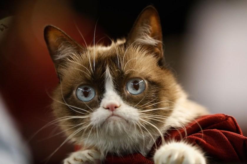 Verdrietig nieuws uit poezenland: Grumpy Cat is overleden