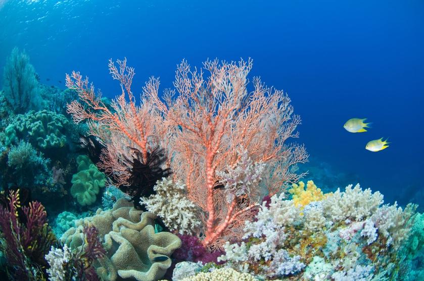 Support the oceans: je kunt nu zélf koraal uit de bedreigde koraalriffen adopteren