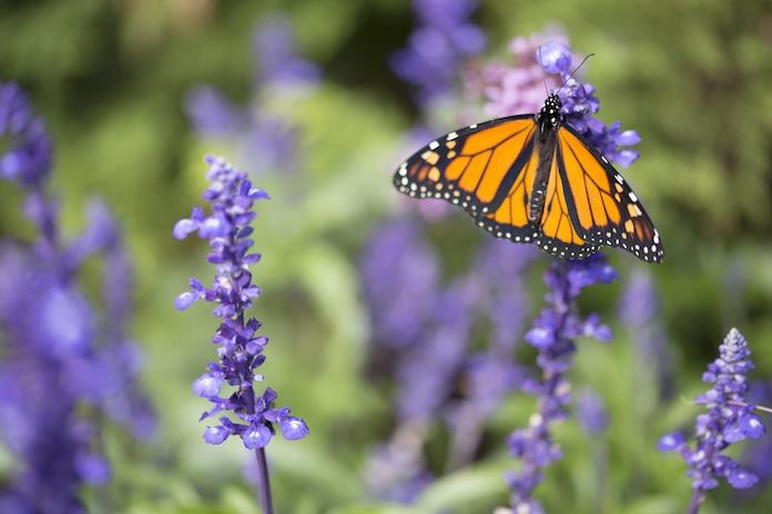 Tuinvlogger Loes: Zo onderhoud je jouw vlinderstruik!
