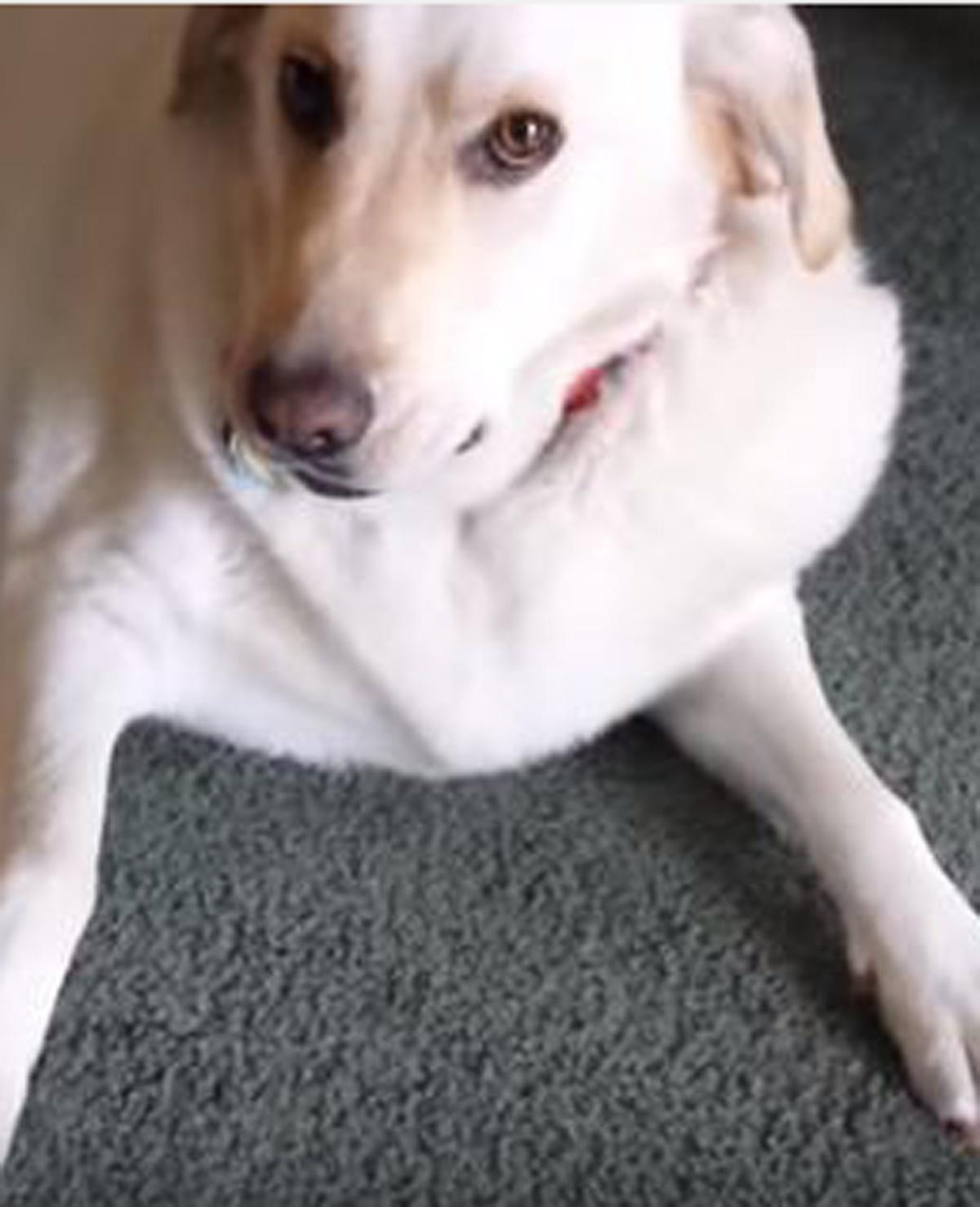 Baasje vraagt aan hond of hij een kroket heeft gestolen