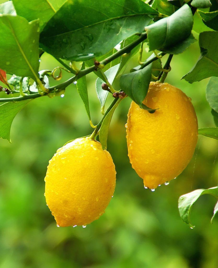 5 redenen om vaker citroenen te eten