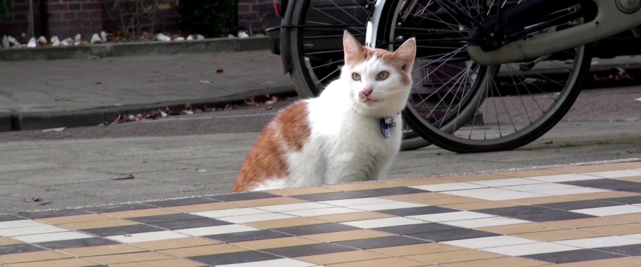 Video: De avonturen van Kat Meneertje aflevering #3