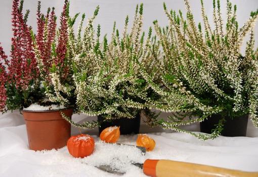 Tuiniertip: zo bescherm je jouw planten tegen de winter