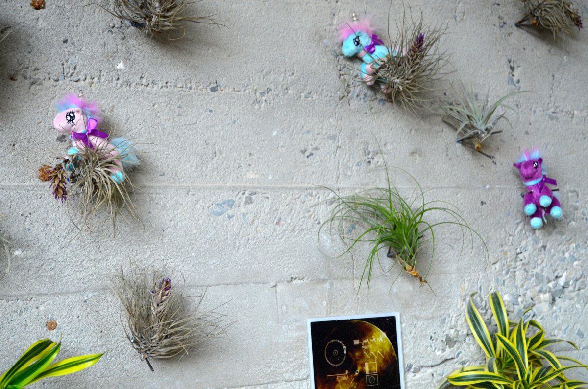 sometimes-that-comes-in-the-form-of-a-pack-of-ponies-galloping-through-the-air-plants