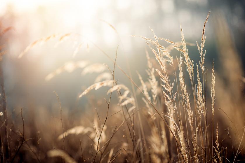 Bereid je maar voor op ernstige klachten en een paar helse dagen: hooikoorts gaat piekperiode in