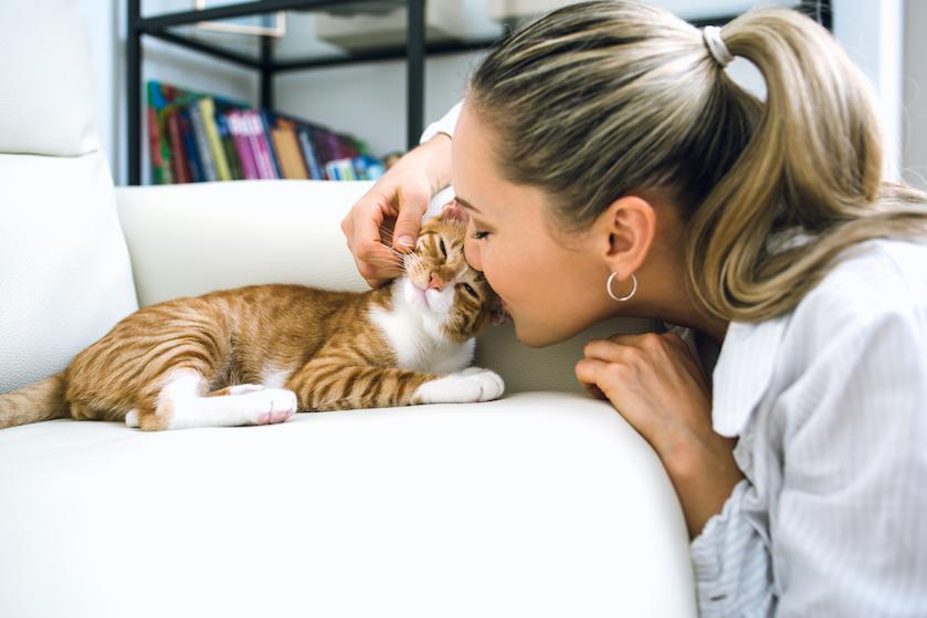 Herkenbaar? 7 tekenen dat je écht een crazy cat lady bent