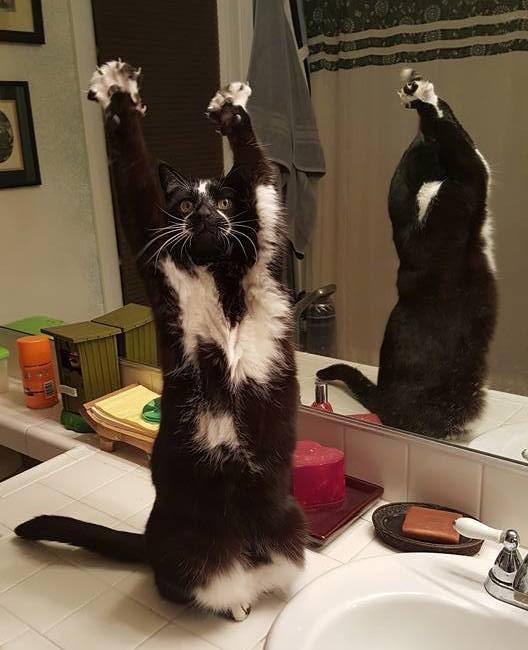 Foto's: deze kat gaat juichend door het leven!
