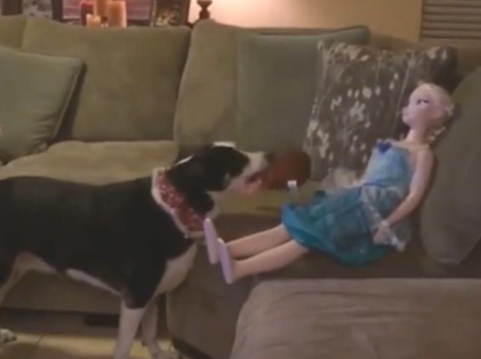 Hond snapt niet waarom er niet met hem gespeeld wordt
