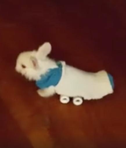 Verlamd konijntje racet op skateboard