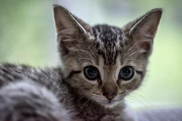 Video: 11 redenen waarom een kat beter is dan een partner