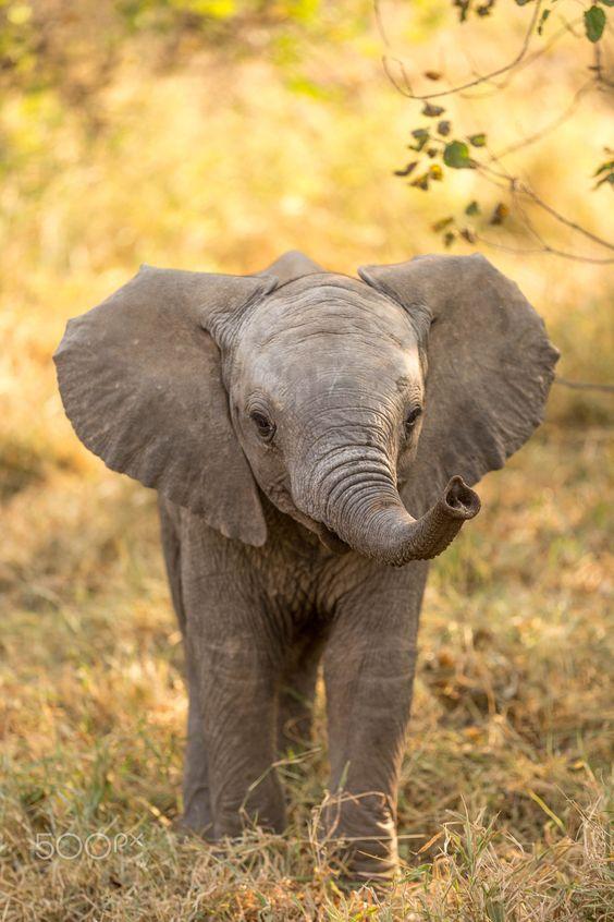 Video: Schattig! Olifantje 'redt' zijn verzorger