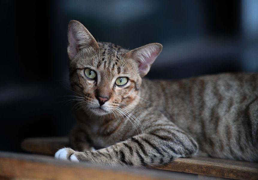 Katten drinken niet zomaar uit een gewoon bakje; hier moet je op letten