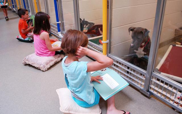 CUTE: schoolkinderen lezen asielhonden verhaaltjes voor