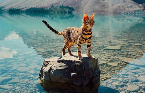 Deze wondermooie kat leidt écht een prachtig leventje