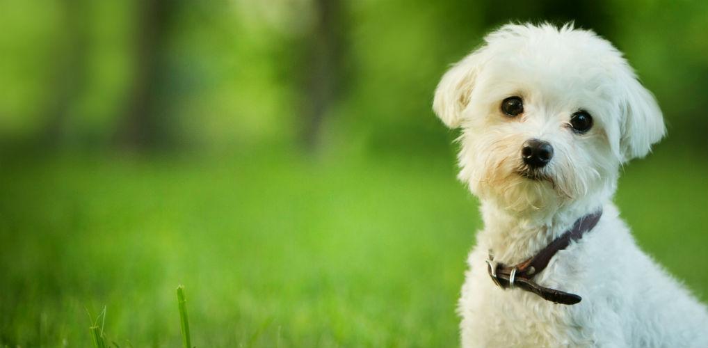 Dit is de reden dat jouw hond je altijd aankijkt tijdens het poepen