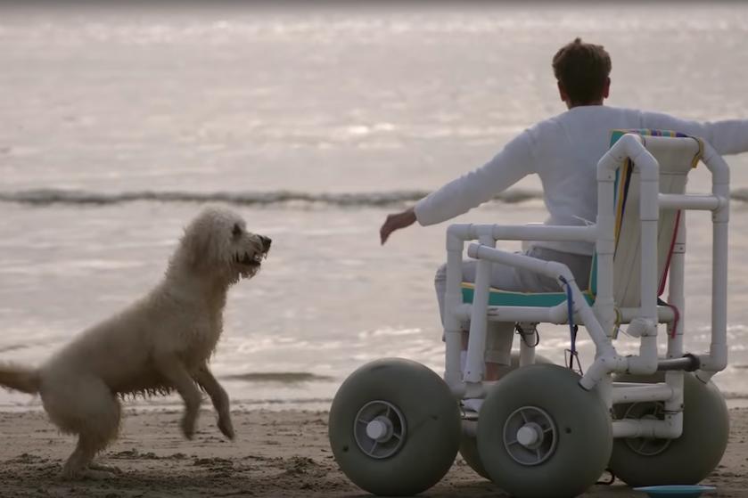 Kijktip voor hondenliefhebbers: de tranentrekkende docu 'Buddy' draait nu in de bioscoop