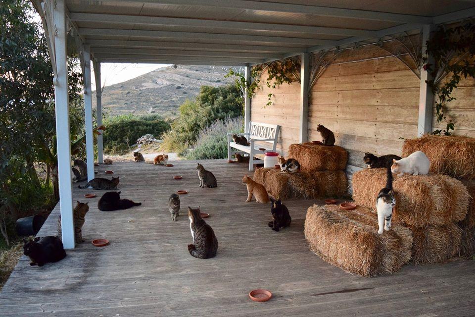 Droombaan alert: op dit Griekse eiland kun je een kattenopvang runnen