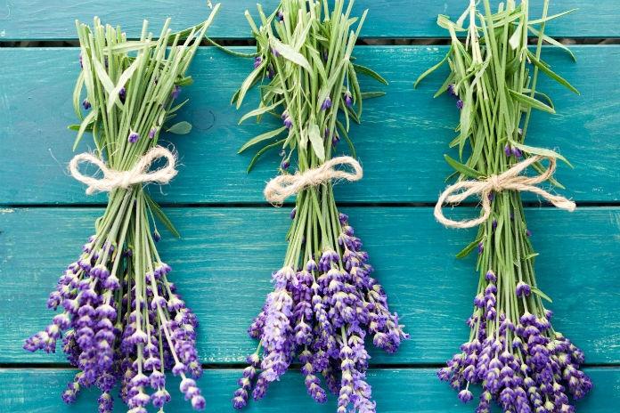 Waar moet je op letten bij het snoeien van lavendel? Tuinvlogger Loes vertelt het je