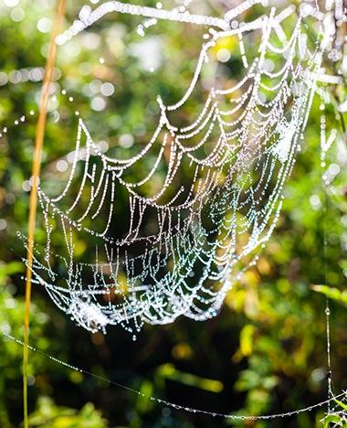 Zo voorkom je spinnen in huis