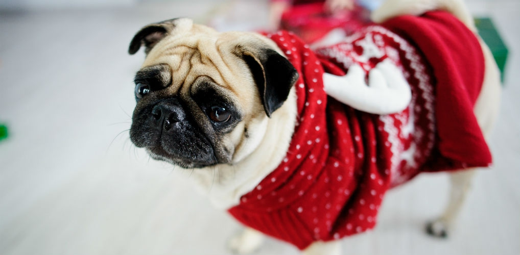 H&M verkoopt de allermooiste kersttruien voor je hond