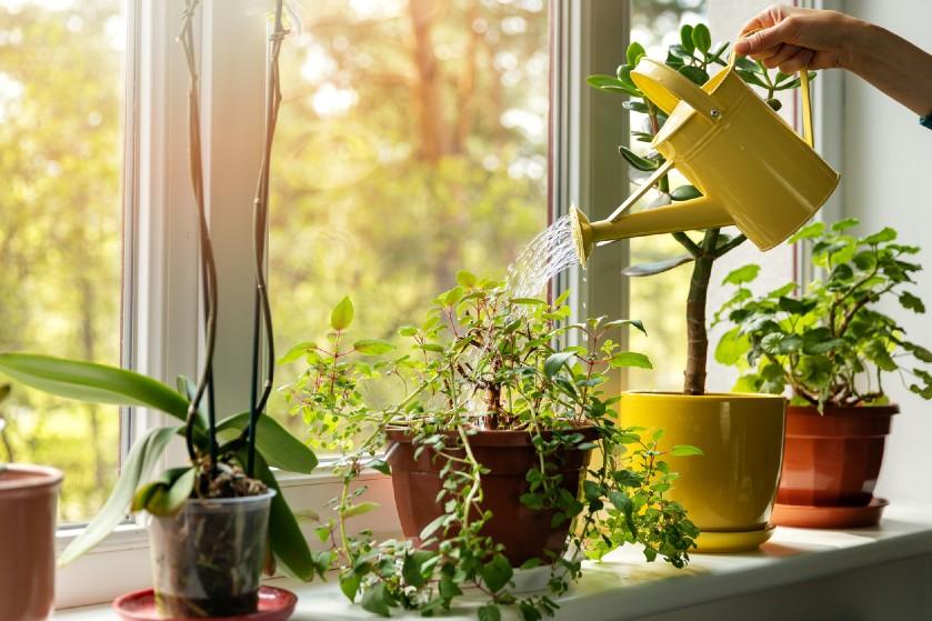 Zo gemakkelijk kan het zijn: met deze tip wek je dode planten weer tot leven