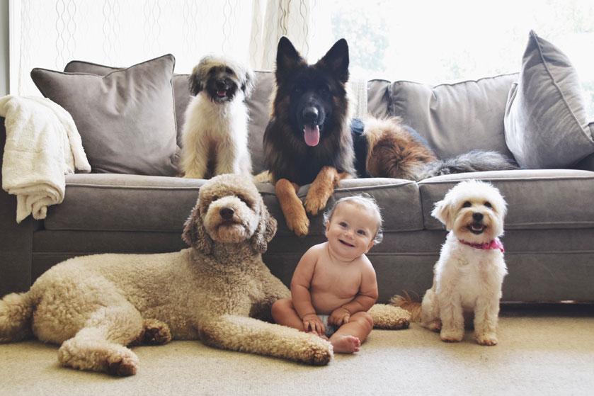 Onderzoek: een puppy opvoeden is net zo zwaar als voor een baby zorgen