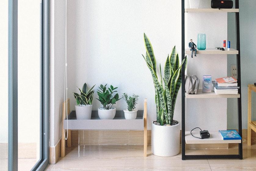 Zo bescherm je jouw planten tegen de verwarming