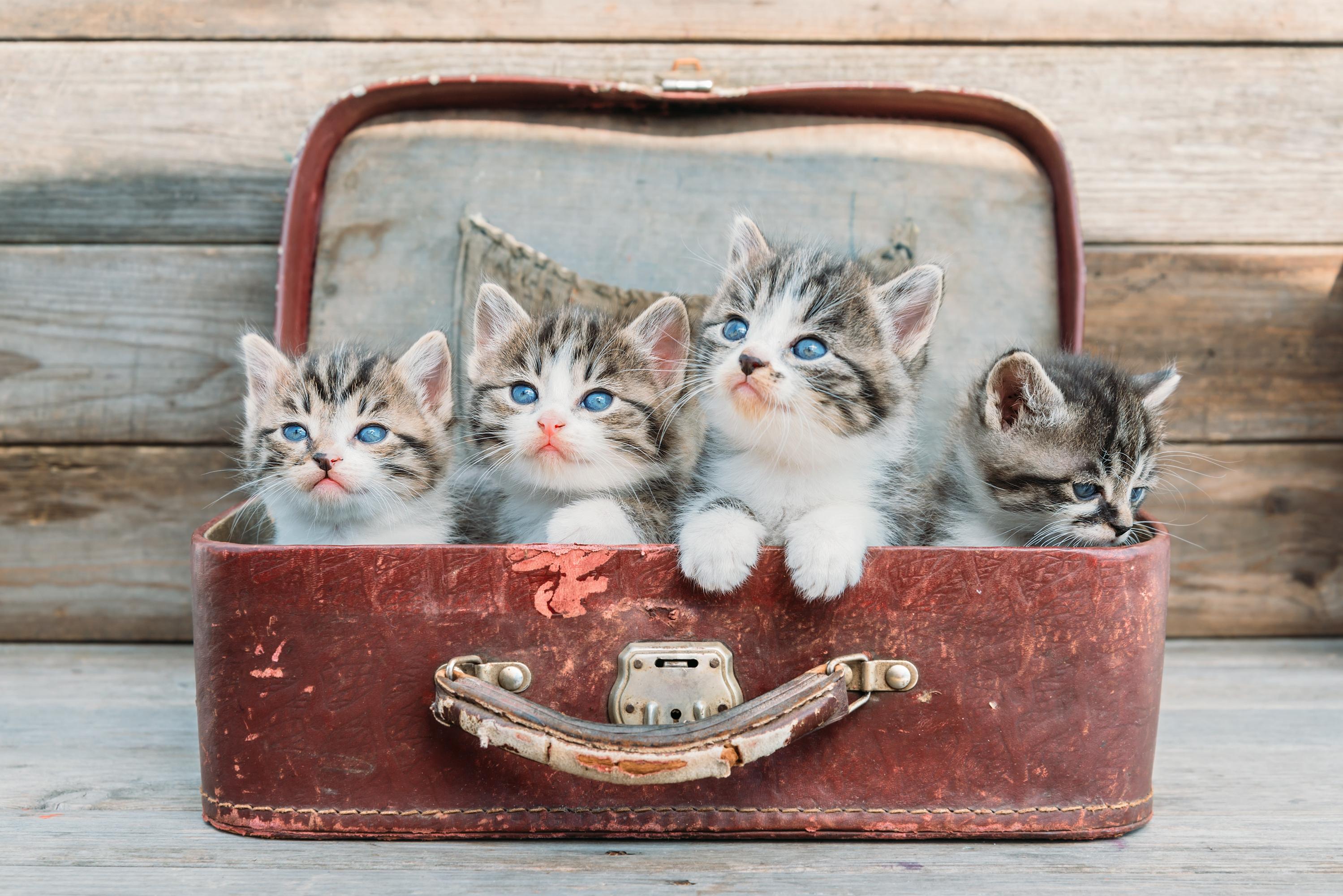 Bewezen: kattenliefhebbers zijn slimmer dan doglovers
