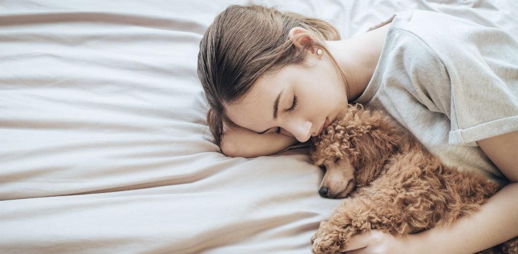 Roomservice please: bij dit hotel kun je een hond bestellen