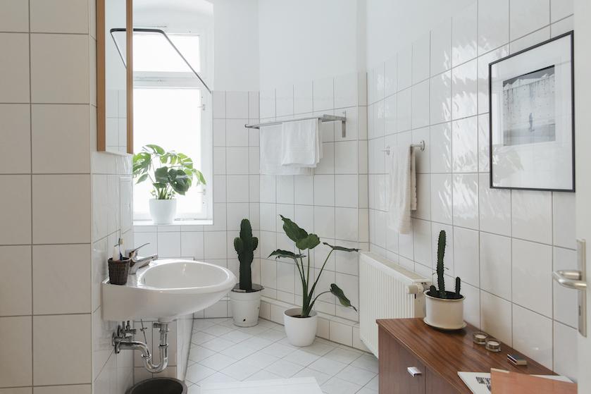 Deze 5 planten zijn perfect voor in de badkamer