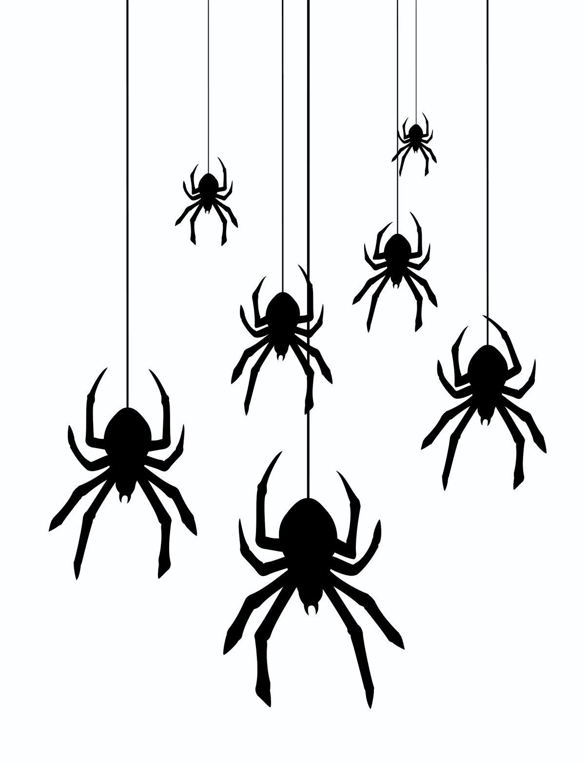 Spinnen vangen? Hiermee vang je elke spin. En nog diervriendelijk ook!