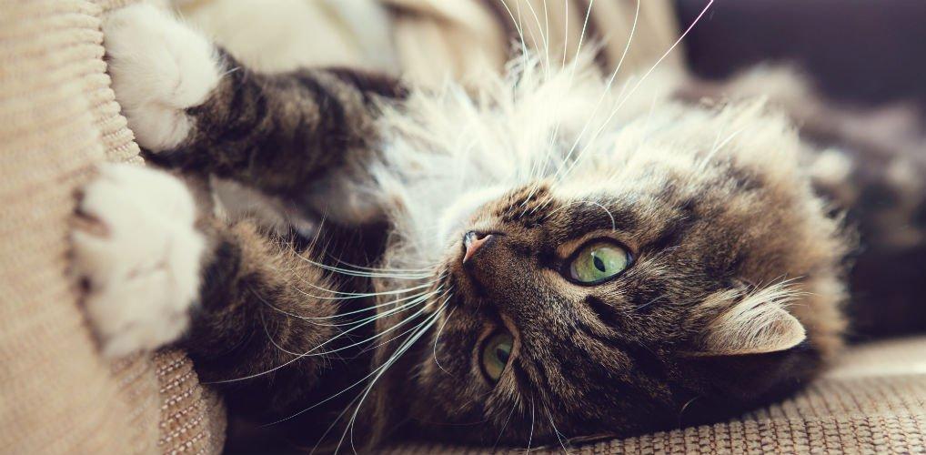 Niet zo kittig: dit is waarom je kat aan meubels krabt