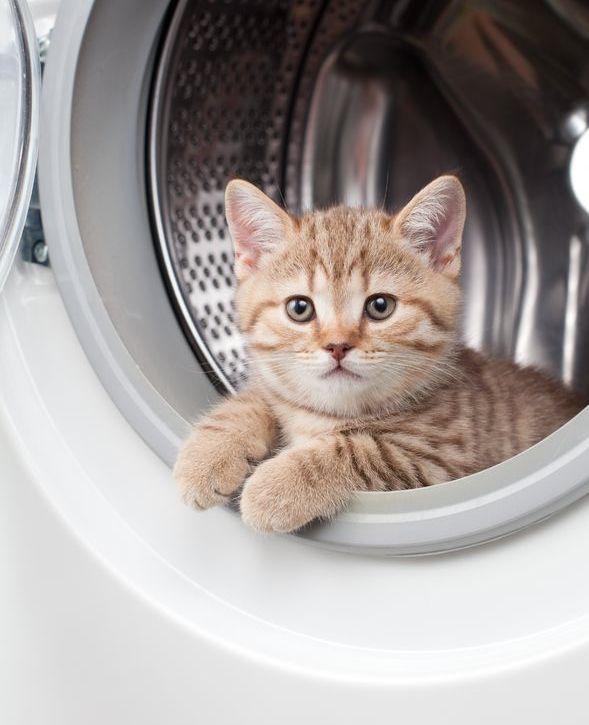 Kat gebruikt wasmachine als sportapparaat