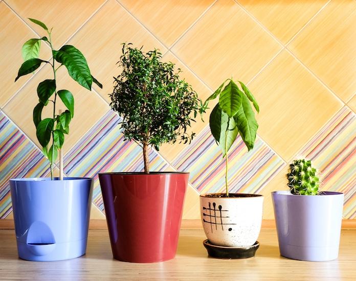 Deze planten bevorderen een goede nachtrust