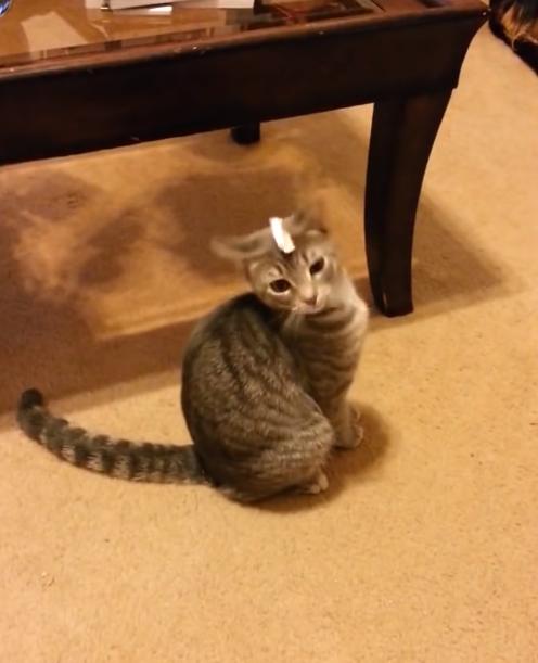 Kat is in de war door stukje tape