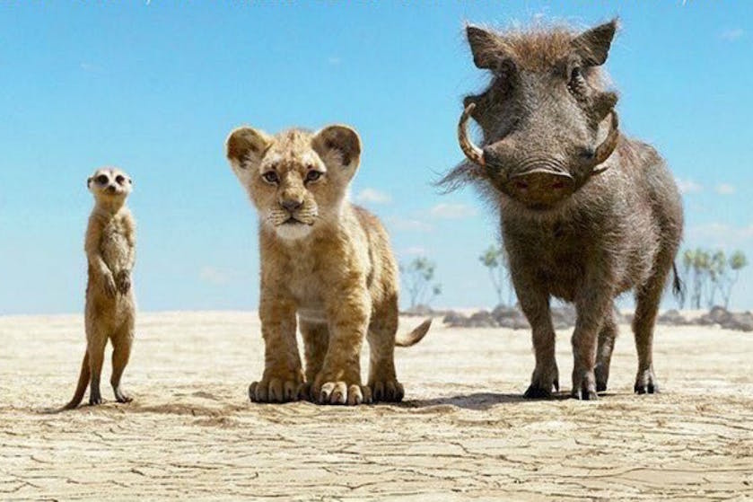 Had jij dit door? Er zit een 'echt' beeld verstopt in de nieuwe 'Lion King'-film