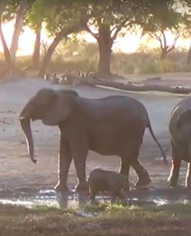 Baby-olifantje wil maar niet uit bad, moeder is er klaar mee